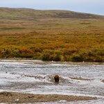 Rainbow King Lodge Alaska fishing lodge image27
