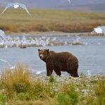Rainbow King Lodge Alaska fishing lodge image26