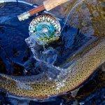 Rainbow King Lodge Alaska fishing lodge image10