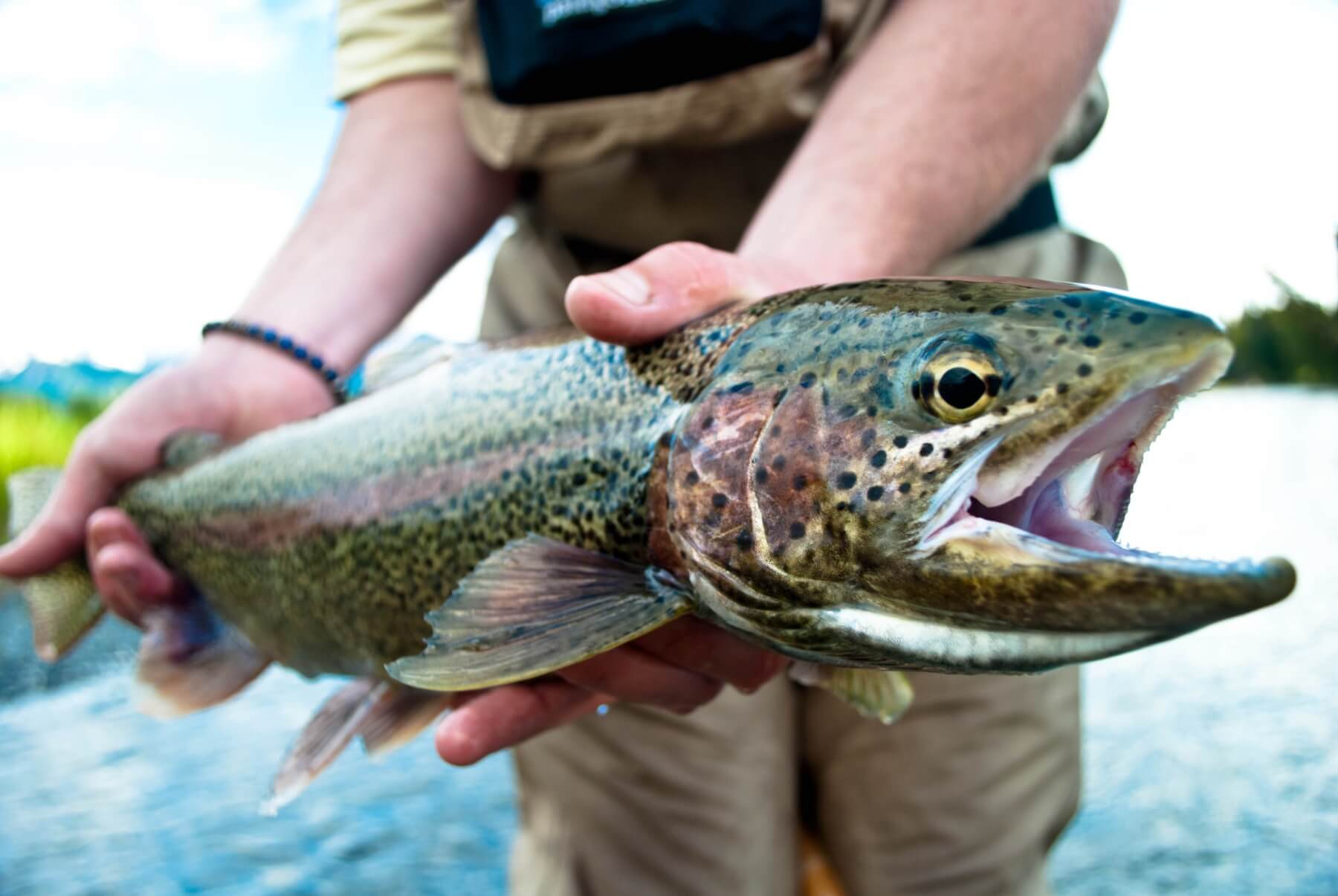 Rainbow trout fly fishing lodges