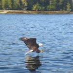 Reel Alaska Fishing Charters Alaska fishing lodge image8