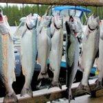 Shearwater Resort & Marina BC fishing lodge image16