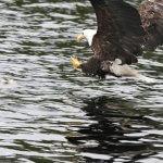 Shearwater Resort & Marina BC fishing lodge image18