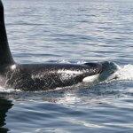 Shearwater Resort & Marina BC fishing lodge image21