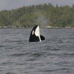 Shearwater Resort & Marina BC fishing lodge image4