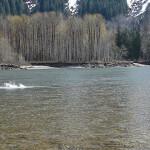 Skeena River Lodge BC fishing lodge image26