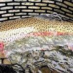 Kenai River Recon Alaska fishing lodge image27