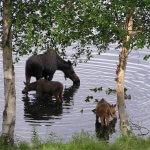 St. Theresa's Lakeside Resort Alaska fishing lodge image17