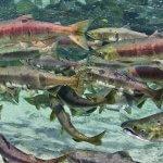 Steamboat Bay Fishing Club Alaska fishing lodge image6