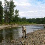Talaheim Lodge Alaska fishing lodge image16