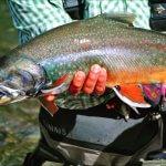 Talaheim Lodge Alaska fishing lodge image32