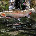 Talon Lodge & Spa Alaska fishing lodge image10