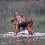 Tincup Wilderness Lodge Yukon fishing lodge image25