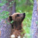 Tincup Wilderness Lodge Yukon fishing lodge image24