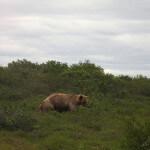 Toman's King Camp Alaska fishing lodge image13