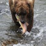 Toman's King Camp Alaska fishing lodge image10
