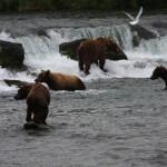 Toman's King Camp Alaska fishing lodge image8