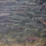 Toman's King Camp Alaska fishing lodge image9