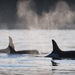 Trailhead Resort & Charters BC fishing lodge image8