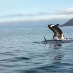 Waterfall Resort Alaska fishing lodge image14