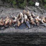 Yes Bay Lodge Alaska fishing lodge image5