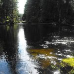 Yes Bay Lodge Alaska fishing lodge image22